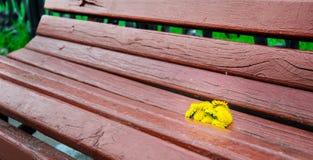 Kwiaty na ławce Zdjęcie Stock