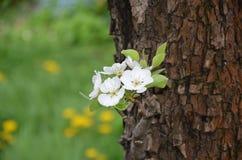Kwiaty na bonkrety drzewie Zdjęcia Stock