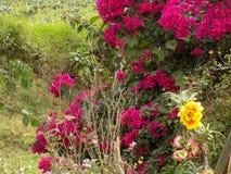 Kwiaty na cierniowatych krzakach zdjęcie royalty free