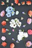 Kwiaty na czerni, skład Fotografia Royalty Free