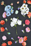 Kwiaty na czerni, skład Obrazy Royalty Free