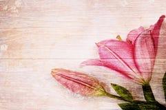 Kwiaty na drewnianym tle Zdjęcia Royalty Free