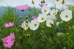 Kwiaty na górze Zdjęcie Royalty Free