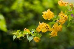 Kwiaty na gałąź Zdjęcia Royalty Free