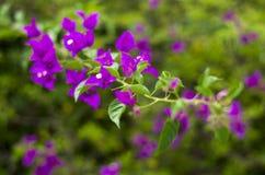 Kwiaty na gałąź Fotografia Stock