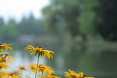Kwiaty na jeziorze zdjęcie royalty free