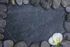Kwiaty na kamieniu dla tła Zdjęcia Royalty Free