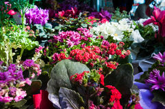 Kwiaty Na kwiaciarni Obrazy Stock