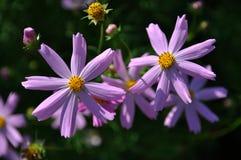 Kwiaty na letnim dniu Obraz Royalty Free