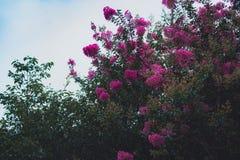 Kwiaty na LUSHAN Zdjęcie Royalty Free