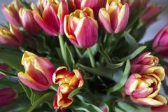 Kwiaty na nadokiennej fotografii Fotografia Stock