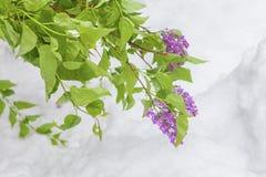 Kwiaty na śniegu Obraz Stock
