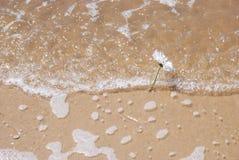 Kwiaty na plaży Obraz Stock