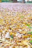 Kwiaty na podłoga Fotografia Stock