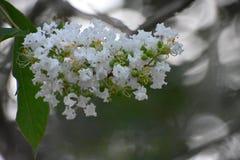 Kwiaty na podłoga Obraz Stock