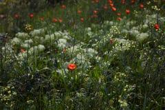 Kwiaty na polu Fotografia Royalty Free