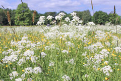 Kwiaty na polu Obrazy Stock