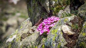 Kwiaty na skałach Obraz Stock