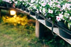 Kwiaty na starych drewnianych mostach zdjęcia royalty free