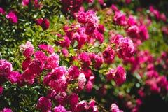 Kwiaty na tle Obrazy Royalty Free