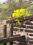 Kwiaty na wałowym Fotografia Royalty Free