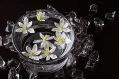 Kwiaty na wodzie Obrazy Royalty Free