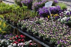 Kwiaty na wprowadzać na rynek kram Obrazy Royalty Free