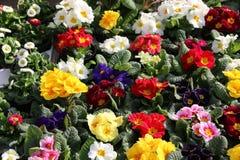 Kwiaty na wprowadzać na rynek kram Obraz Royalty Free