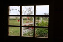 Kwiaty na zewnątrz mój okno Obraz Stock