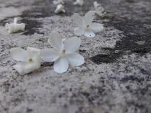 Kwiaty na ziemi Fotografia Royalty Free