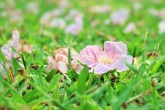 Kwiaty na ziemi w jawnym parku Fotografia Royalty Free