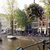 Kwiaty nad wodą Zdjęcie Royalty Free