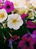 kwiaty naturę zdjęcia royalty free