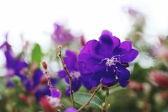 kwiaty naturę zdjęcie stock