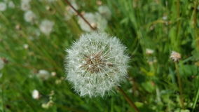 kwiaty naturę Zdjęcia Stock