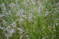 kwiaty naturę Obraz Royalty Free