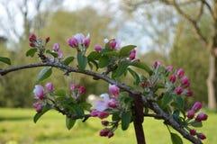 kwiaty naturę fotografia royalty free