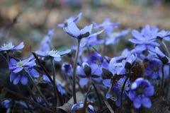 kwiaty naturę Obraz Stock