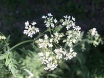 Kwiaty - natura w parku zdjęcie royalty free