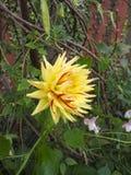 Kwiaty natury ` s boiska ogród Fotografia Stock