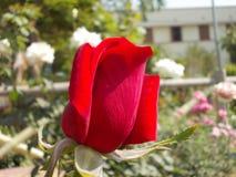 Kwiaty natury ` s boiska ogród Zdjęcia Stock