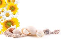 kwiaty obramiają denne skorupy Zdjęcie Royalty Free