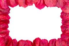 kwiaty obramiają purpury Fotografia Royalty Free