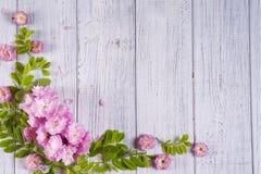 kwiaty obramiają wiosna ilustracyjnego wektor Fotografia Royalty Free