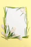 kwiaty obramiają wiosny Zdjęcia Royalty Free