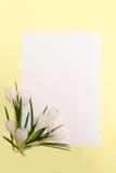 kwiaty obramiają wiosny Obraz Royalty Free