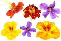 kwiaty odłogowania Zdjęcia Stock