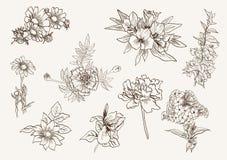 kwiaty odłogowania Fotografia Royalty Free