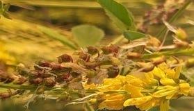 Kwiaty od równiien zdjęcia royalty free