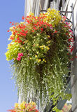 Kwiaty Od Seattle Fotografia Royalty Free